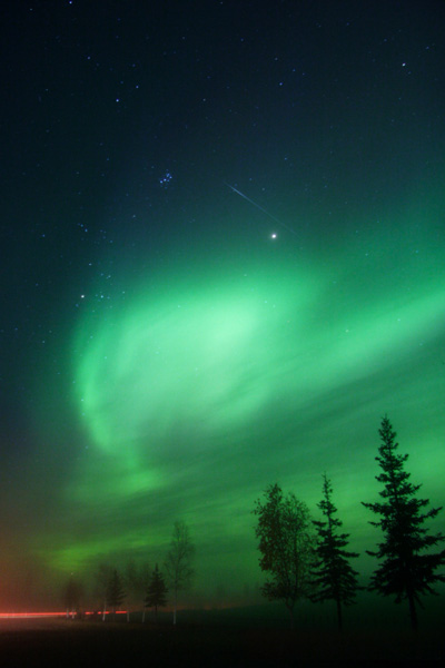 green northern lights and fir tree silhouettes