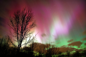 pink aurora borealis and deciduous tree branches
